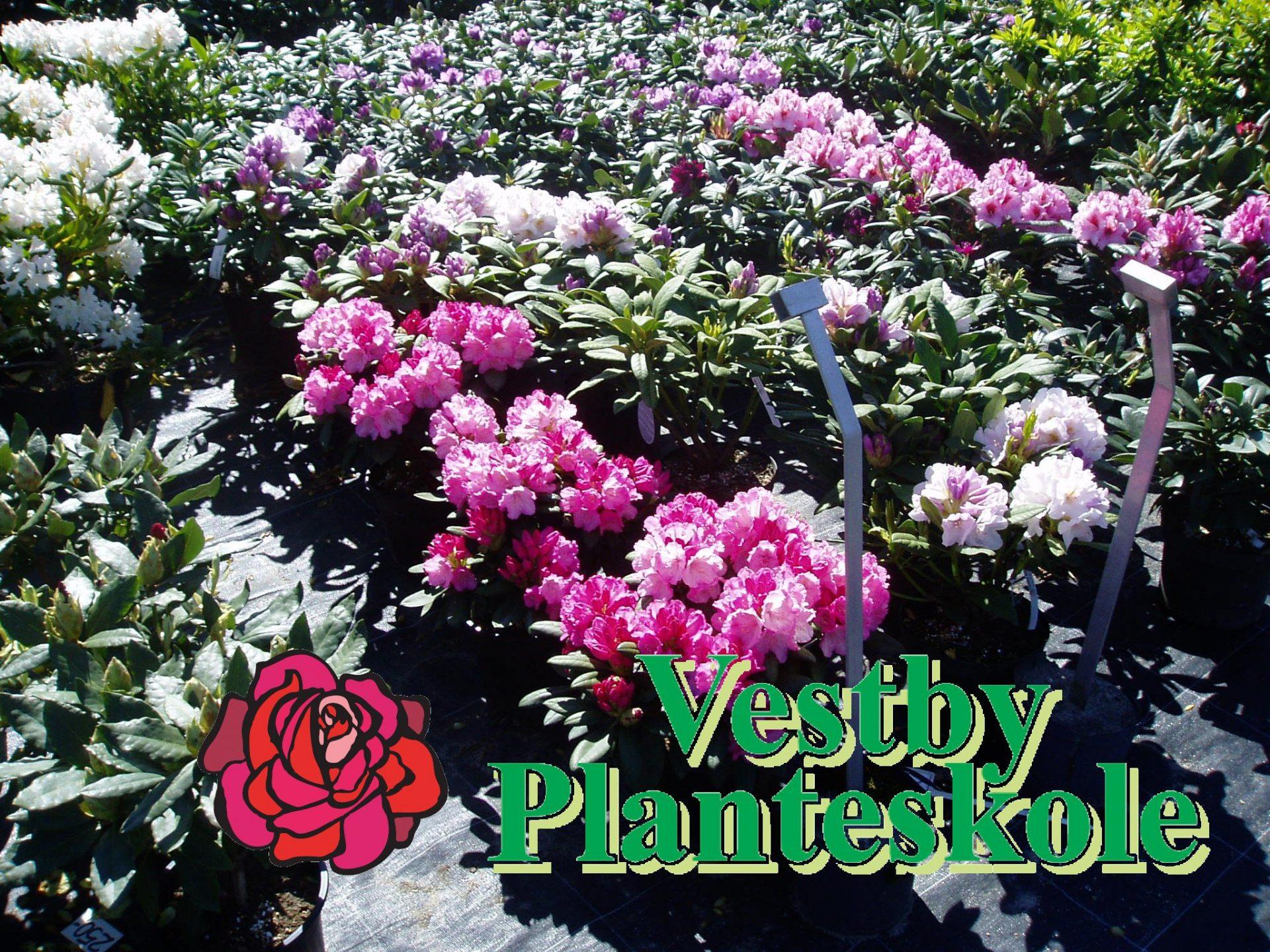 gavekort vestby planteskole