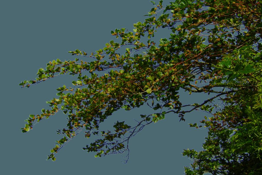 deler av grener på et tre